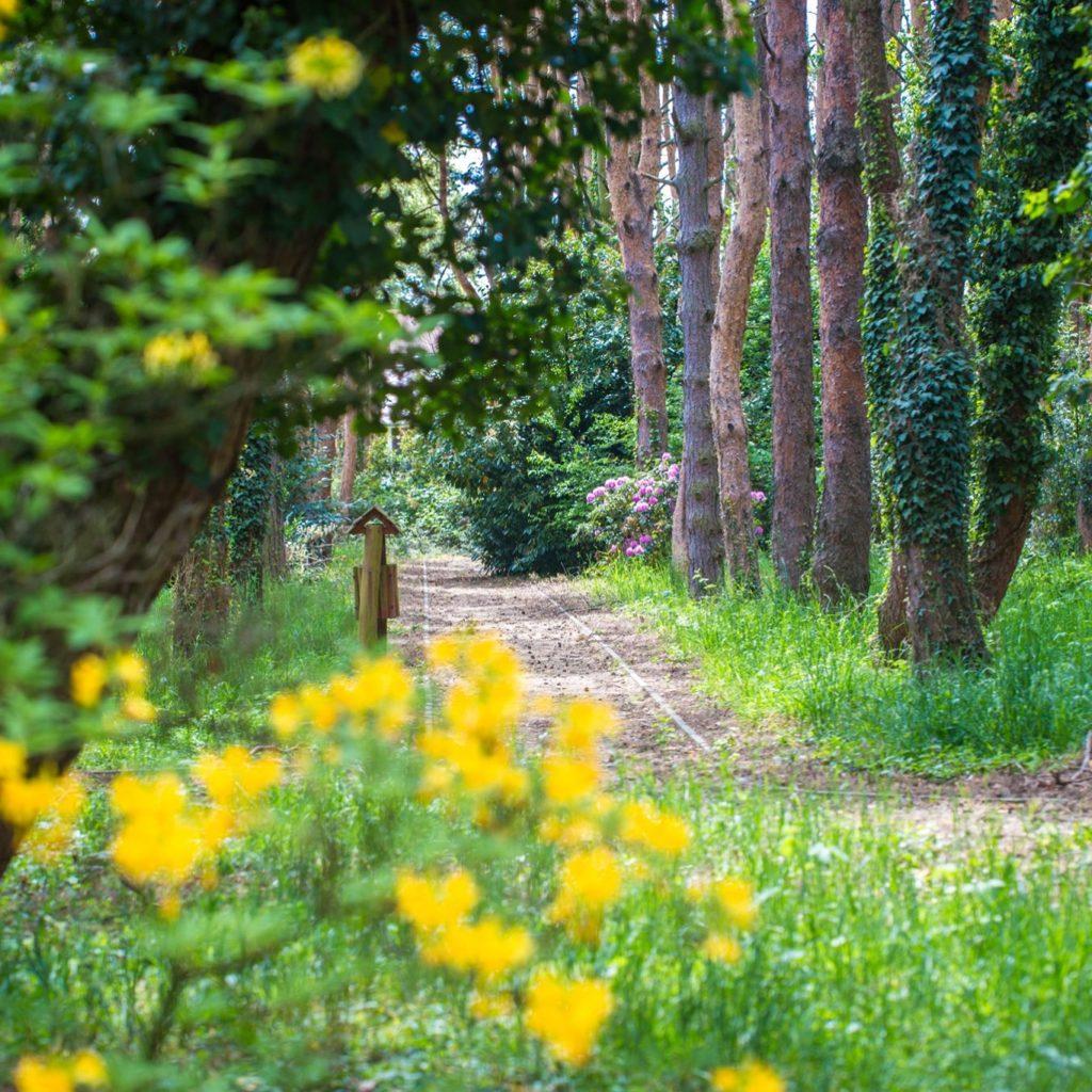Kamoni_arboretum